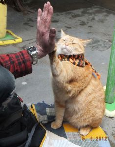 Bob...The Street Cat who along with his owner James, Busked outside the Angel Station.